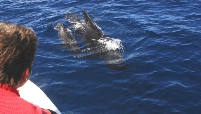 Walbesichtigung