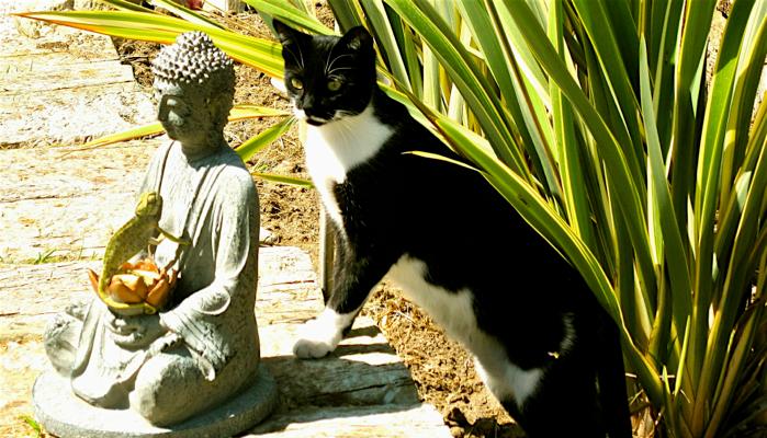 Zen & Meerlust